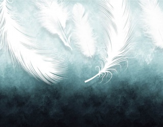 Фотообои Белые перья с потолка 29260