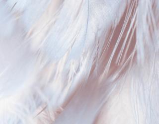 Фотообои Розовые перья 27825