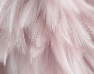 Фотообои Перья розовые 27700