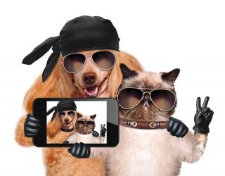 Фотообои кот с собакой делают селфи 20754