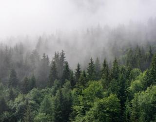 Фотообои туман и лес 20922
