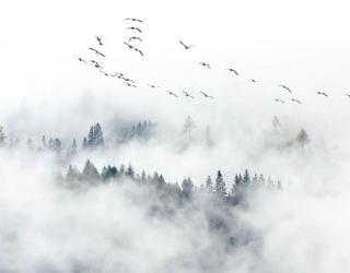 Фотообои Туманный лес с птицами 28952