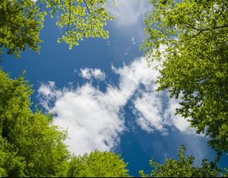 Фотообои Ветви и небо на потолок 22606