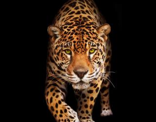 Фотообои леопард 20475