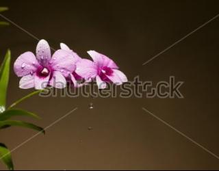 Фотообои Орхидея 399512545