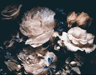 Фотообои Винтажные цветы на черном фоне 22507