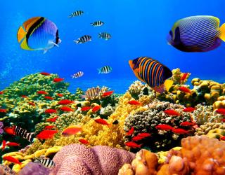 Фотообои Морское дно, рыбки 4606