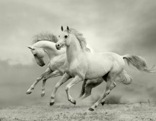 Фотообои Животные