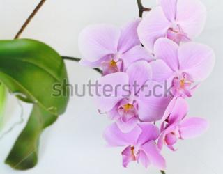 Фотообои Орхидея 404614045