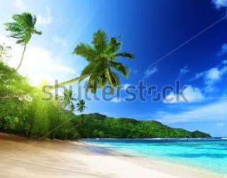 Фотообои Пляж, пальмы 124333858