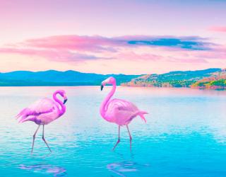 Фотообои Фламинго 18082