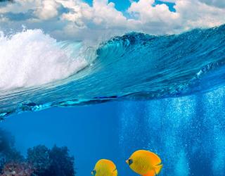 Фотообои Две рыбки в море 6952