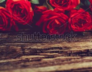 Фотообои Розы 245224093