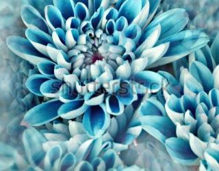 Фотообои Цветы 97436714