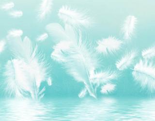 Фотообои Белые перья на бирюзовом фоне 29196