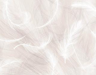 Фотообои Бежевый фон и белые перья 28191