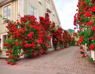 Фотообои Розы в переулке 10611