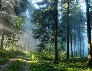 Фотообои Деревья в лесу 23157