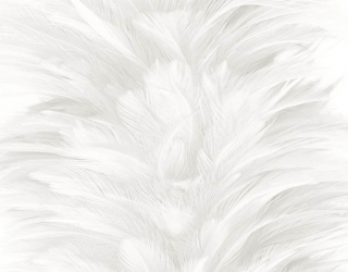 Фотообои Белые перья 29222