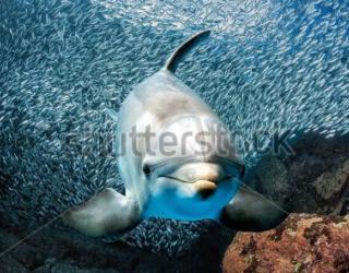 Фотообои Дельфин под водой 451267309