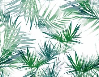 Фотообои зеленые пушистые листья  20998