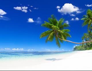 Фотообои Пальмы, море и белый песок 20748