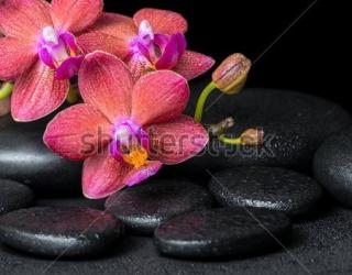Фотообои Орхидеи, камни 427601158