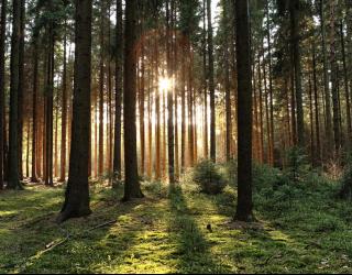 Фотообои солнце пробивается в лесу 21069