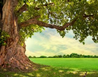 Фотообои большое дерево 20753
