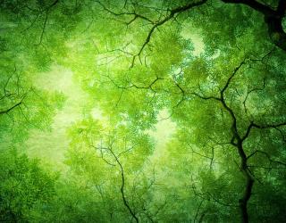 Фотообои Вид на дерево снизу 22521