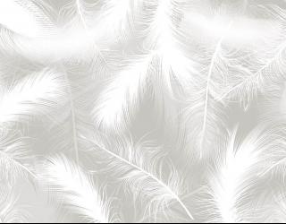 Фотообои Белые векторные перья 29316