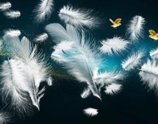 Фотообои Белые перья и золото 27847