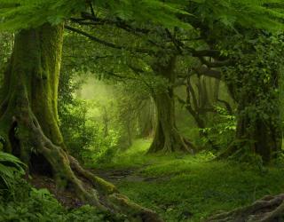 Фотообои зеленый лес 21078