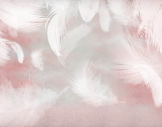 Фотообои Перья на розовом фоне 23890