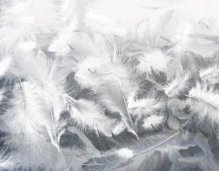 Фотообои Воздушные белые перья 29319