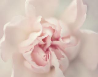 Фотообои Макро цветок 22709