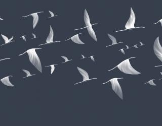 Фотообои Птицы в line art 24234