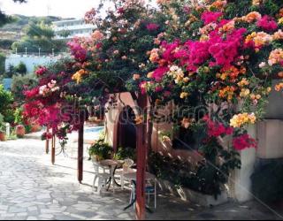 Фотообои Цветы 456107533