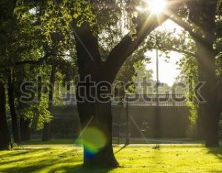 Фотообои Дерево, солнце, трава 456058792