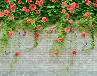 Фотошпалери Троянди на цегляній стіні 22944