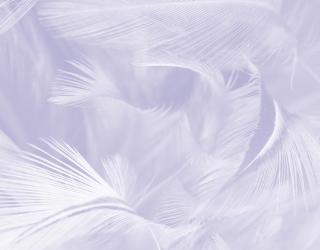 Фотообои нежные перья 21573