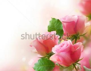Фотообои Розы 95221399