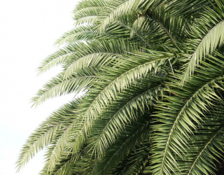 Фотообои Пальмовые ветки 22697