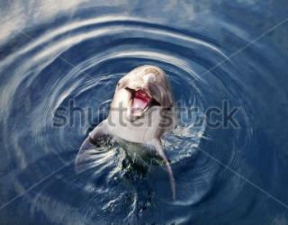 Фотообои Дельфины 454536517