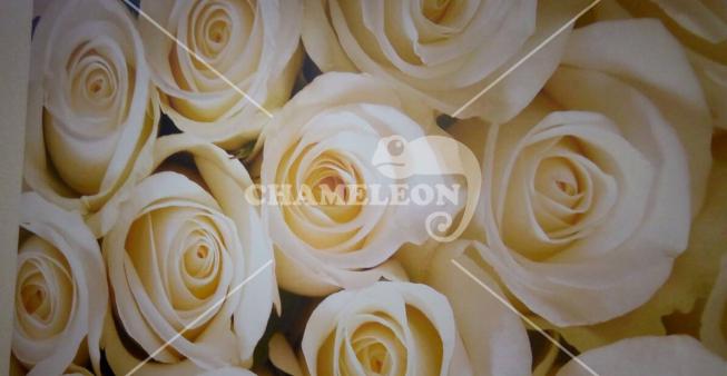 Фотообои в интерьере  - Фотообои Розы