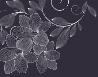 Фотошпалери Векторні візерунки квіти 23877