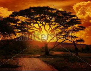 Фотообои Африка 123544153