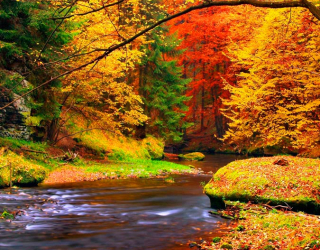 Фотообои Вода, ручей, осень  10544