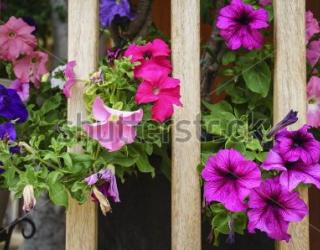 Фотообои Цветы 447169033