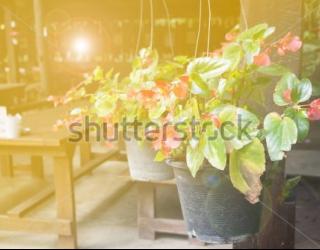 Фотообои Столик, цветы 449804788
